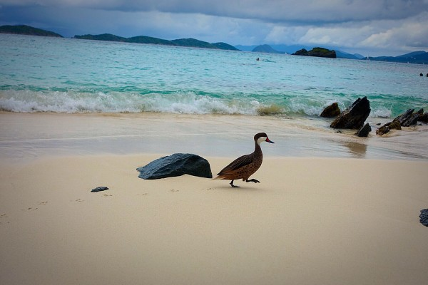 S&STravel-Caribbeans